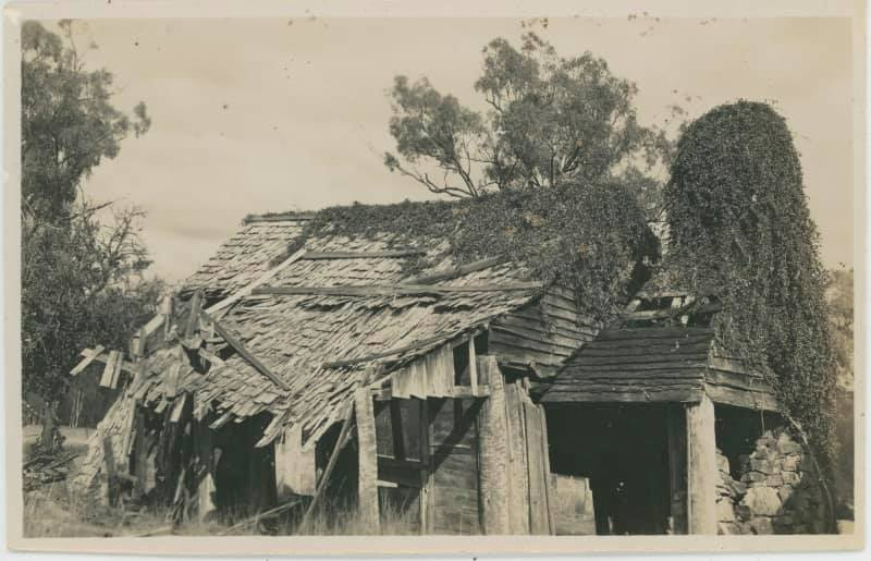 Black and white photograph showing the remains of a timber building with collapsing roof of timber shingles, and the ruins of a large chimney/fireplace at one end.  Creepers have overgrown the roof and chimney.