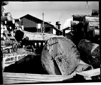 QSA DID 3033: Logs from Fraser Island at Hynes & Son sawmill, Maryborough, 11 July 1967