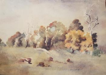 Watercolour painting of a landscape featuring a yellow-flowered wattle tree at far right.  There is a collection of other trees at the rear of the image, with a green grassy slope and rocks to be seen in the foreground.  The signature RM Campbell is at lower right of image.