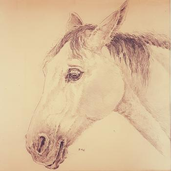 Pencil drawing of a horse's head looking to the left.  The horse's ears are tilted back, so it may be listening to something behind it, or it may be in a bad mood!  It has a darker mane and muzzle, and lighter coat.  It has been initialed RMC under the chin of the horse.