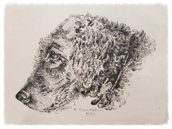 Black and white etching of a dog's head in profile facing to the left.  The dog is wearing a collar, and is possibly a longhaired terrier of some kind.  Under the image is the etched signature R. CAMPBELL and the date 1930